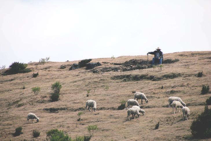 lambad karjamaal