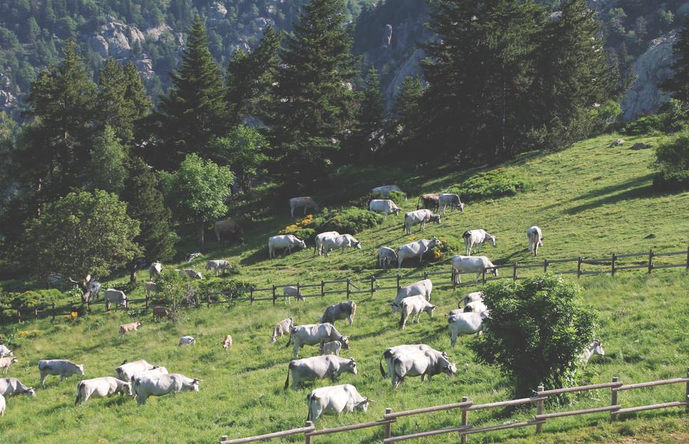 lambad söövad karjamaal