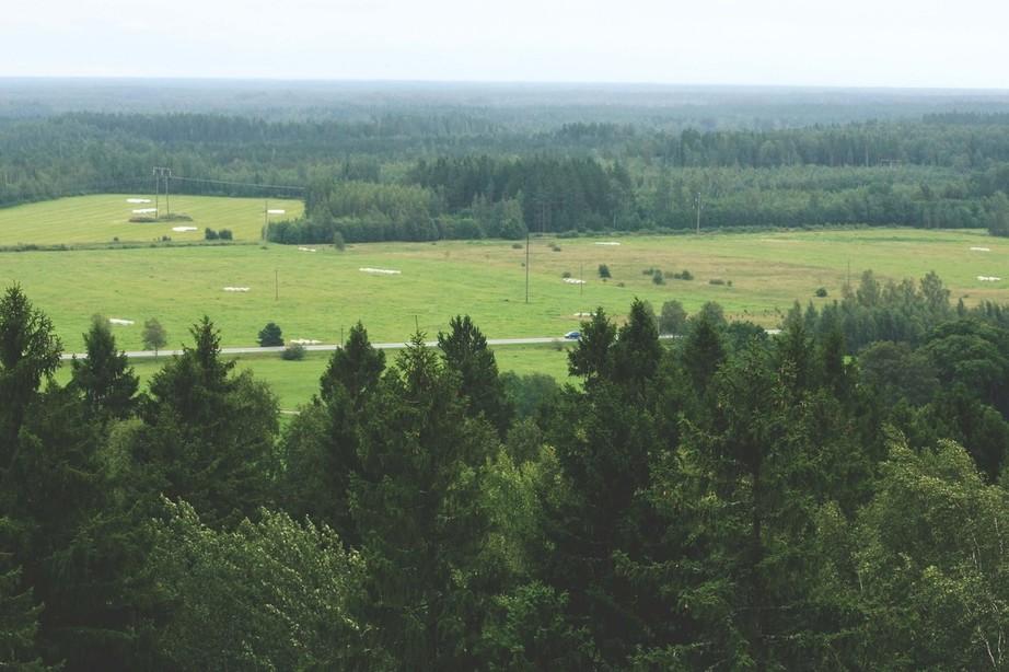virumaa metsad