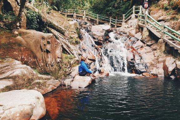 reis vietnami