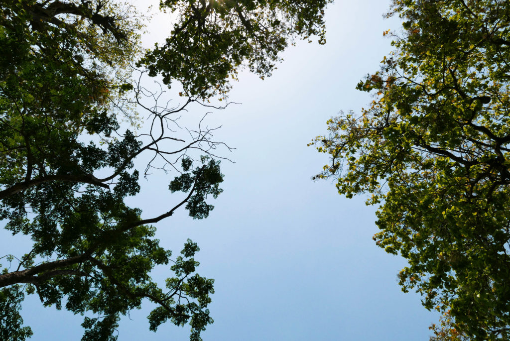 puud ja taevas