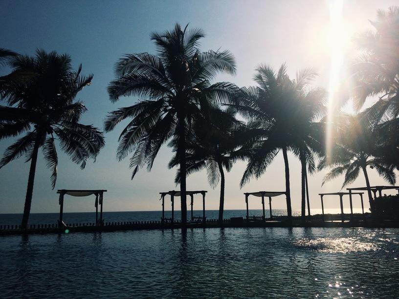 palmipuud
