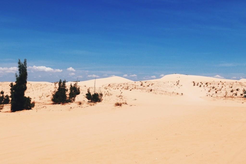 kõrb pilt