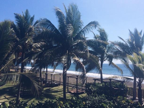 palmid ja meri