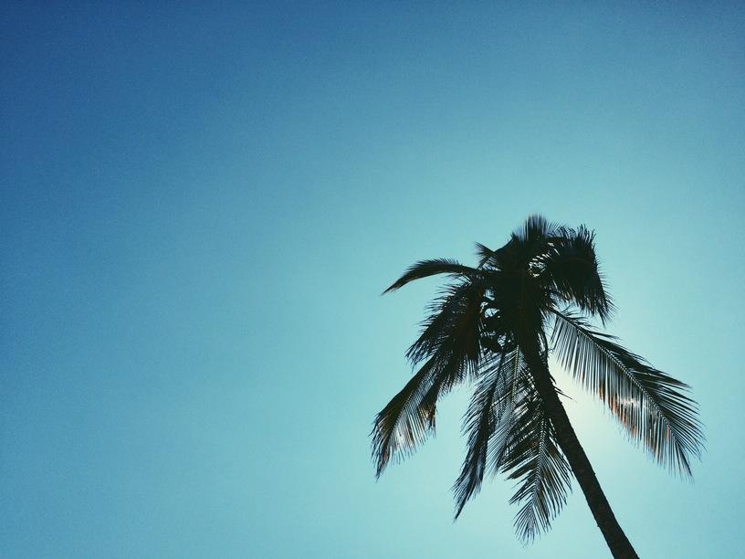 palmipuu