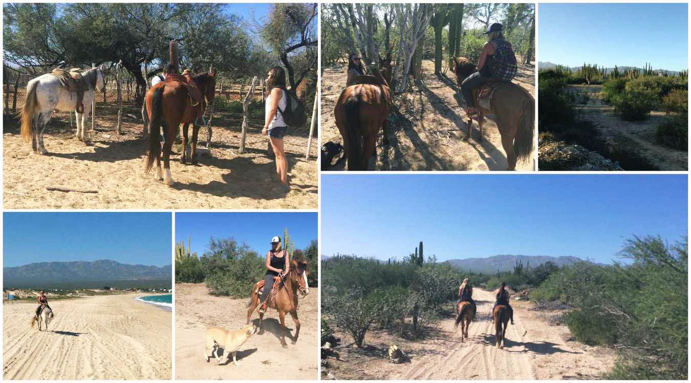hobustega ratsutama