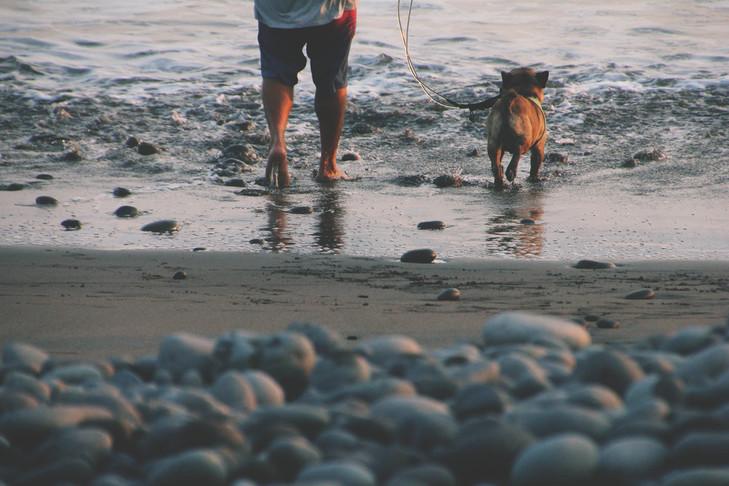 koeraga rannas jalutamas