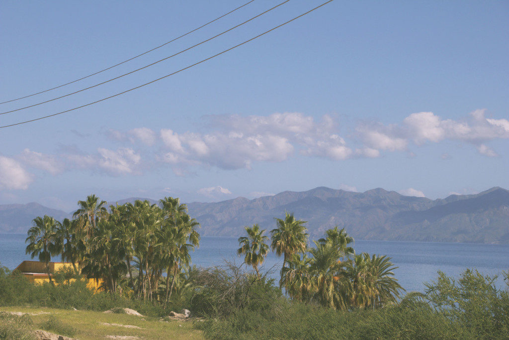 palmipuud mehhikos