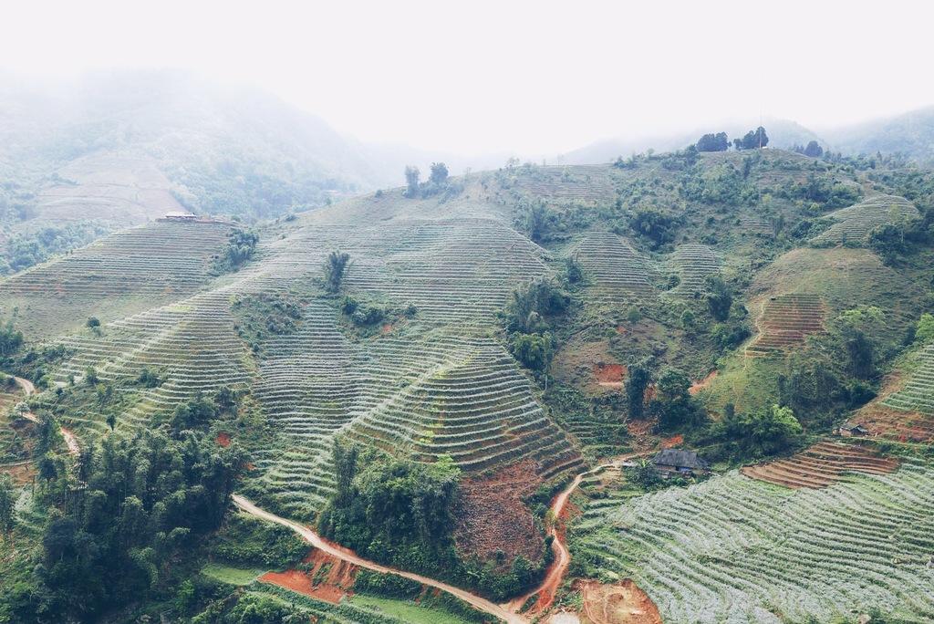 riisiväljad