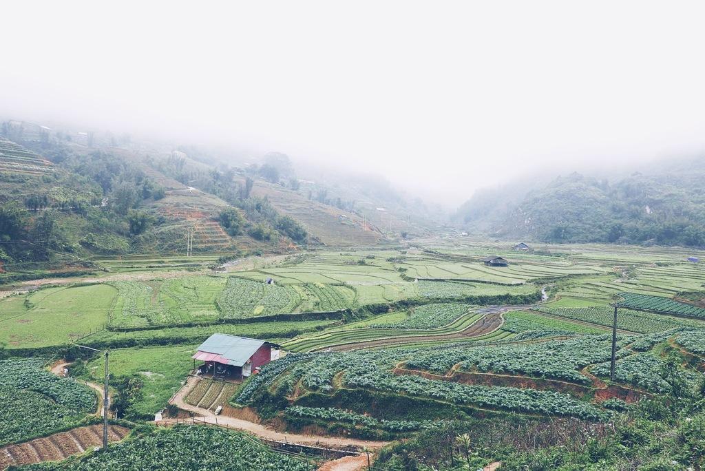 vietnami põllumajandus