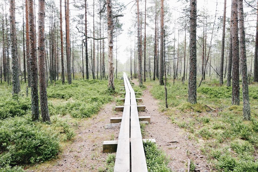 metsa matkama