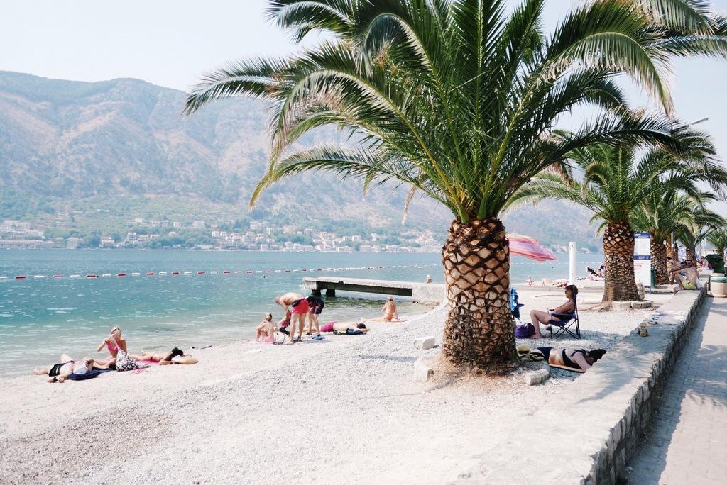 palmipuud ja meri